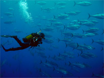 Snorkeling and scuba diving in Sardinia South West